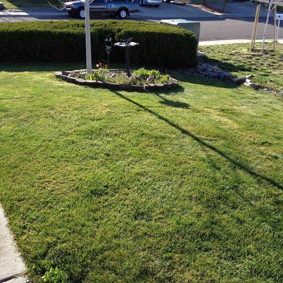 lawn pic 2